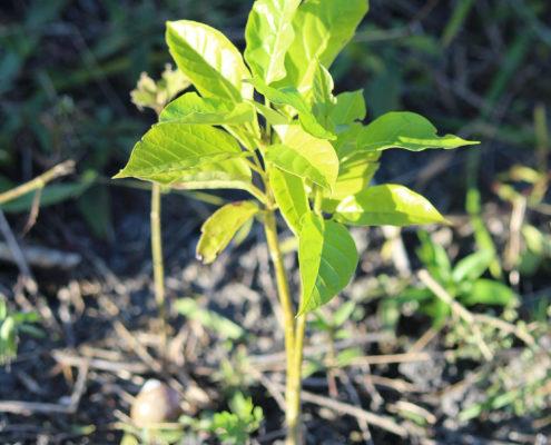 Plant-for-the-Planet Bundesverdienstkreuz für Plant-for-the-planet & Soulcover wird klimaneutral bis 2020